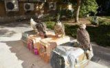 کشف بزرگترین محموله قاچاق پرندگان در معرض انقراض در بوشهر