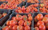 سیلیِ سرخِ گوجه فرنگی بر صورت مردم و مسئولین